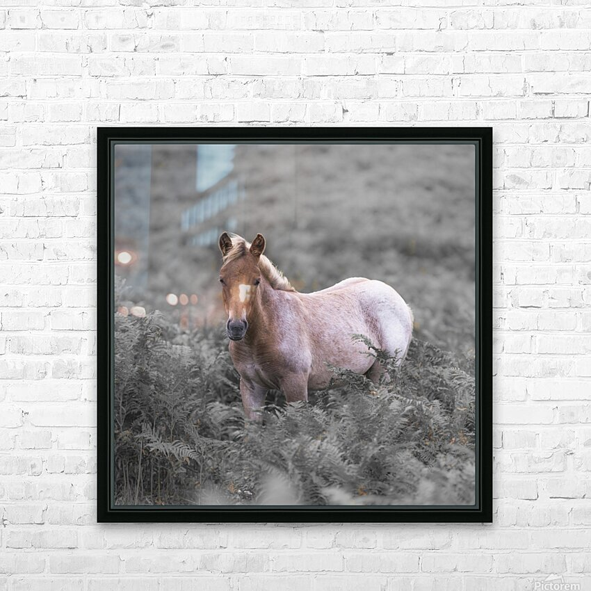 Wild Horses, New Forest HD Sublimation Metal print with Decorating Float Frame (BOX)