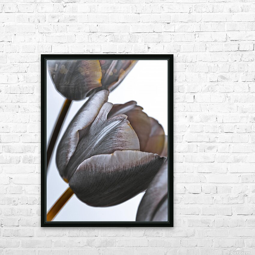 Tulip flowers on white background HD Sublimation Metal print with Decorating Float Frame (BOX)