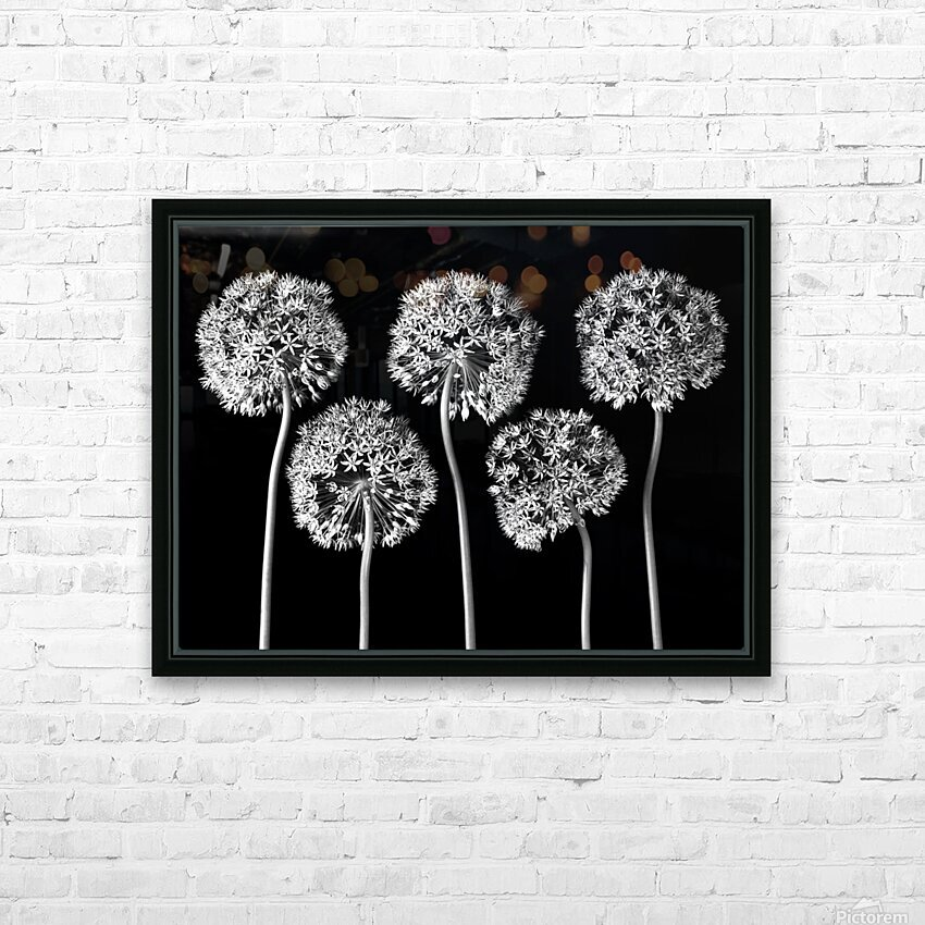Allium flowers HD Sublimation Metal print with Decorating Float Frame (BOX)