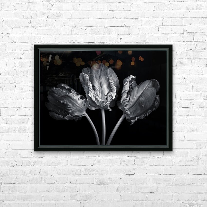 Three rococo tulips close-up HD Sublimation Metal print with Decorating Float Frame (BOX)