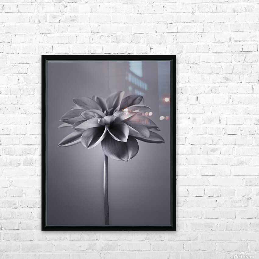 Dahlia Flower HD Sublimation Metal print with Decorating Float Frame (BOX)