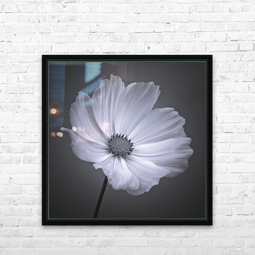 Cosmos flower HD Sublimation Metal print with Decorating Float Frame (BOX)