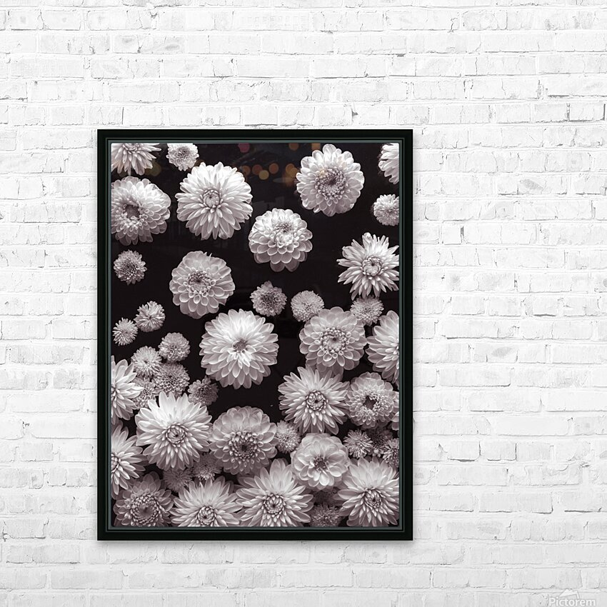 Dahlia Flowers, Full Frame HD Sublimation Metal print with Decorating Float Frame (BOX)