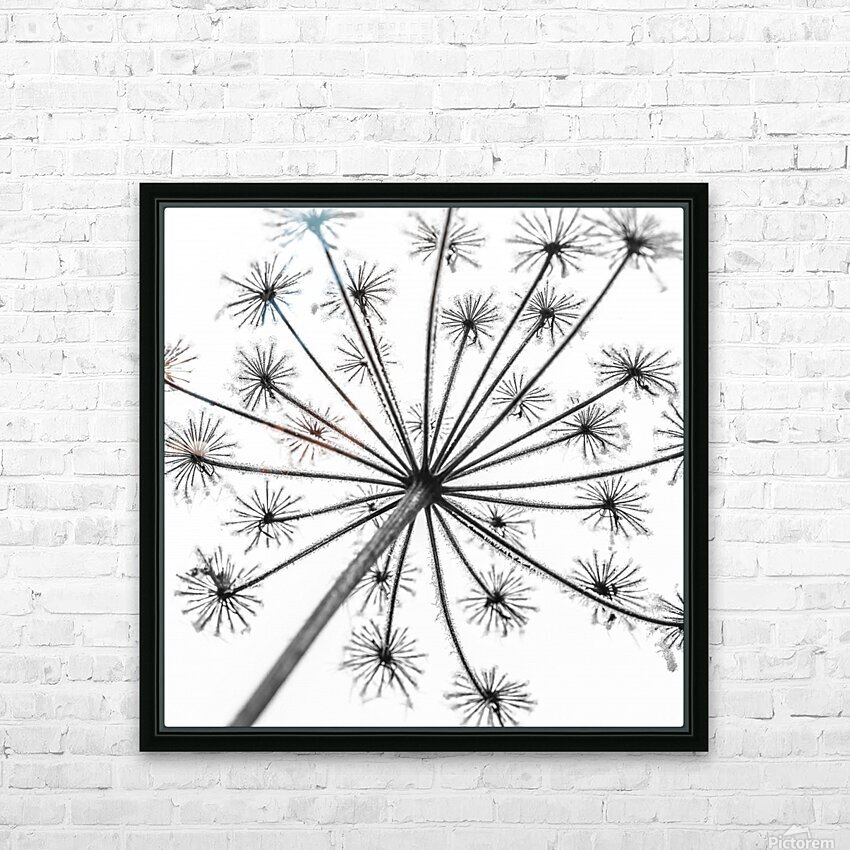 Frosty cow parsley HD Sublimation Metal print with Decorating Float Frame (BOX)