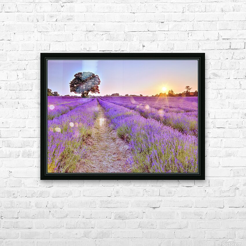 Lavender field at sunset HD Sublimation Metal print with Decorating Float Frame (BOX)