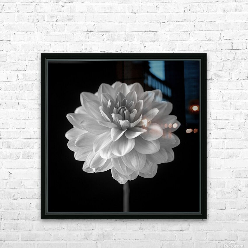 Dahlia flower on black background HD Sublimation Metal print with Decorating Float Frame (BOX)