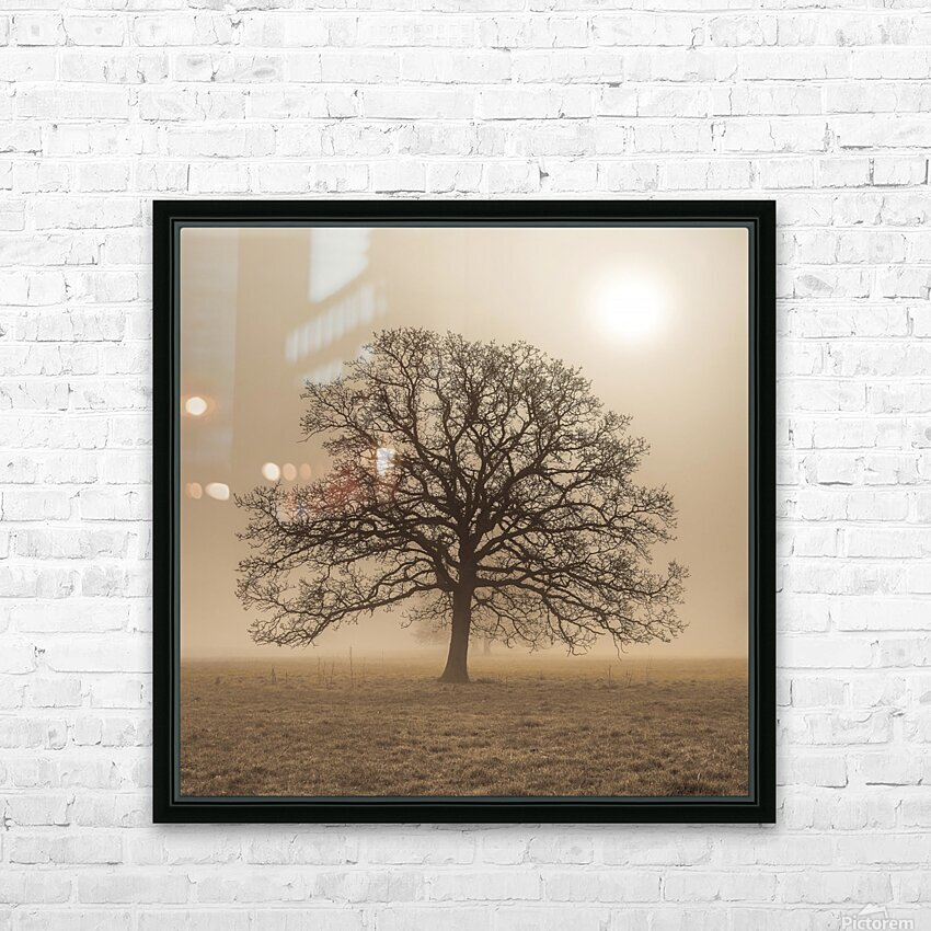 Trees in grass fields HD Sublimation Metal print with Decorating Float Frame (BOX)