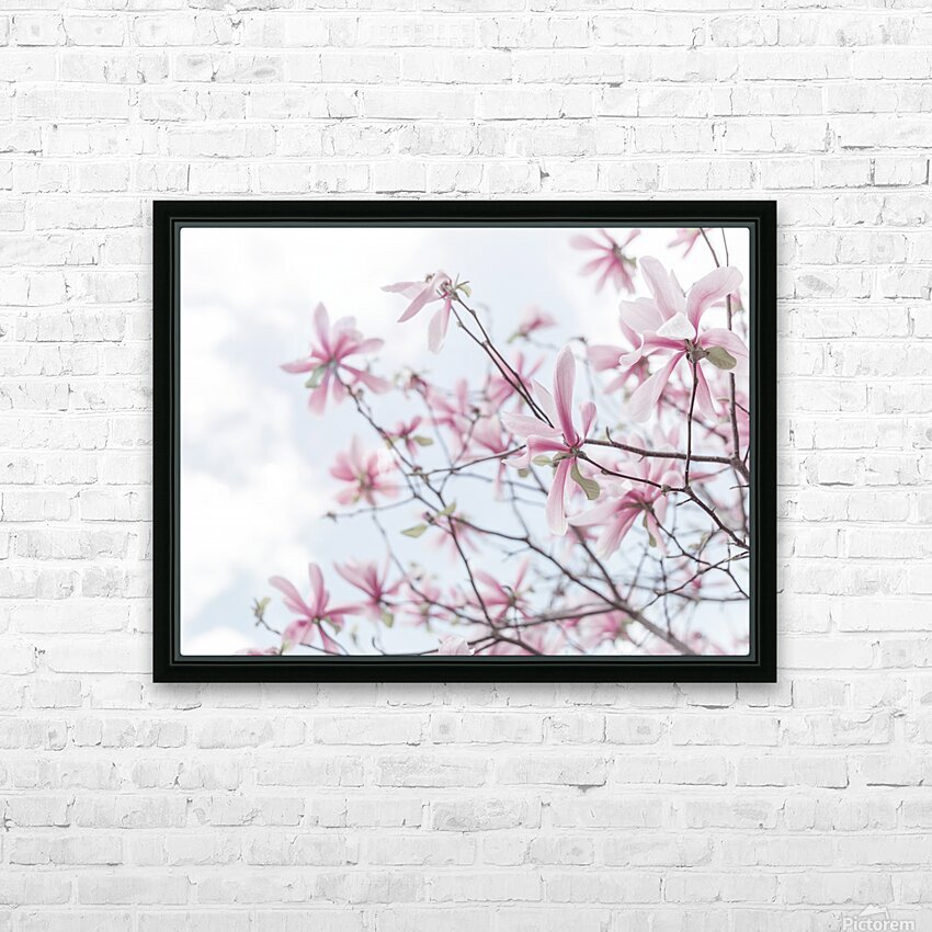 Magnolias against sky HD Sublimation Metal print with Decorating Float Frame (BOX)