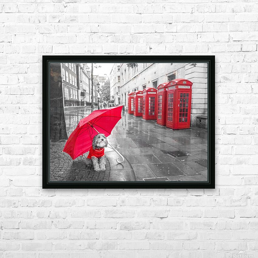 Dog with umbrella on London city street HD Sublimation Metal print with Decorating Float Frame (BOX)