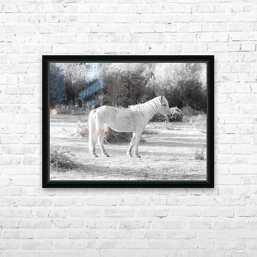 Horses at the New Forest, UK HD Sublimation Metal print with Decorating Float Frame (BOX)