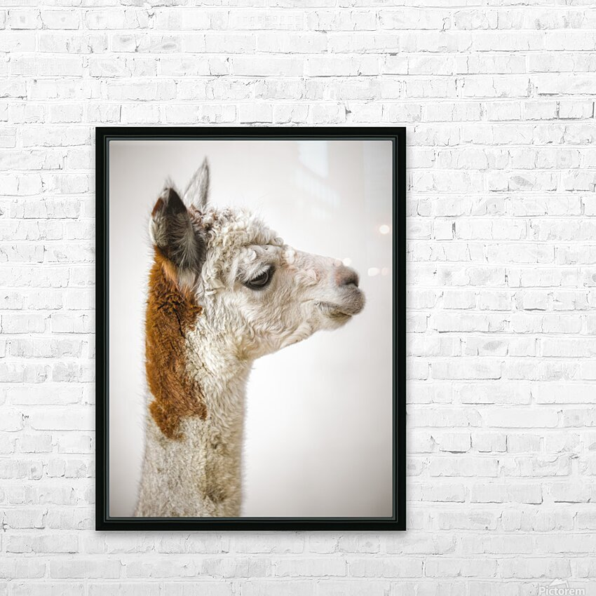 Close-up of Alpaca HD Sublimation Metal print with Decorating Float Frame (BOX)