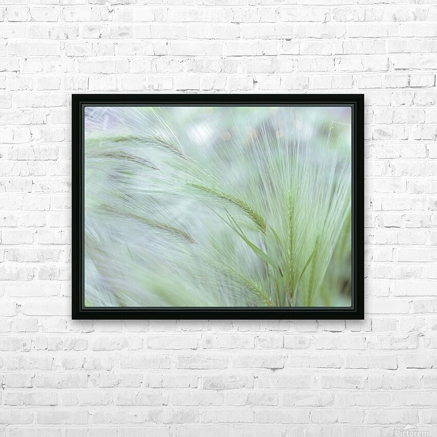 Wild grass Foxtail Barley HD Sublimation Metal print with Decorating Float Frame (BOX)