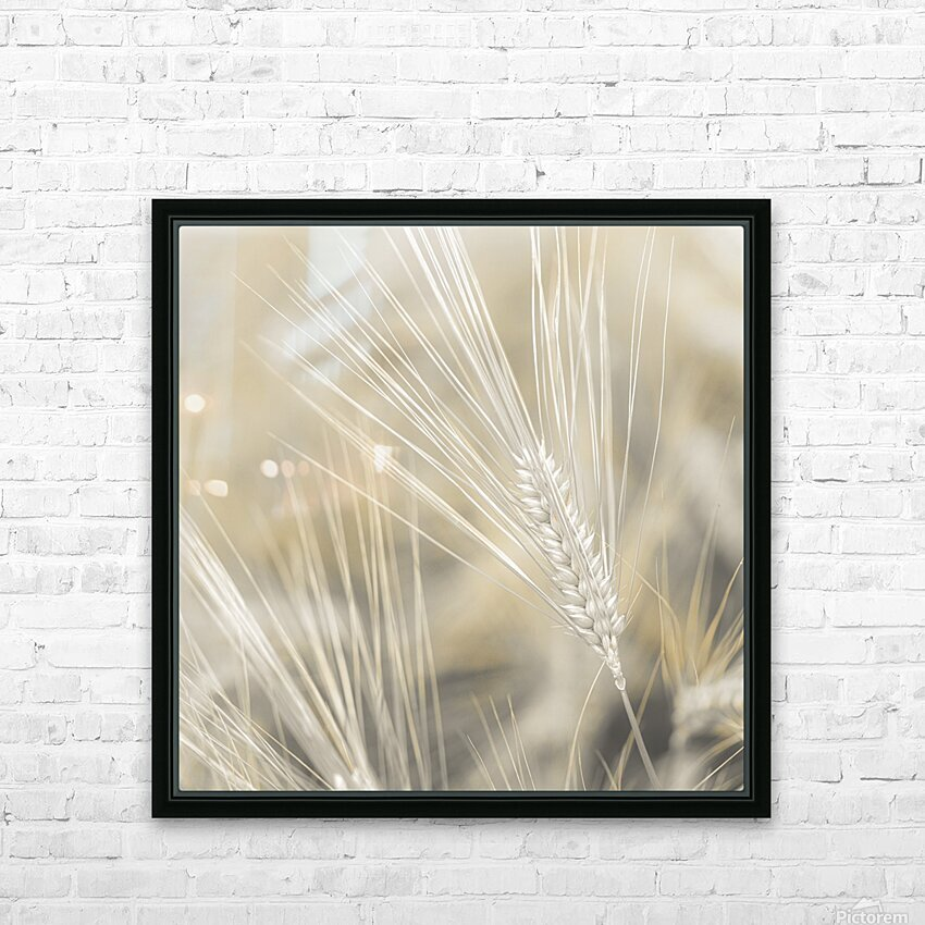 Wheat close-up HD Sublimation Metal print with Decorating Float Frame (BOX)