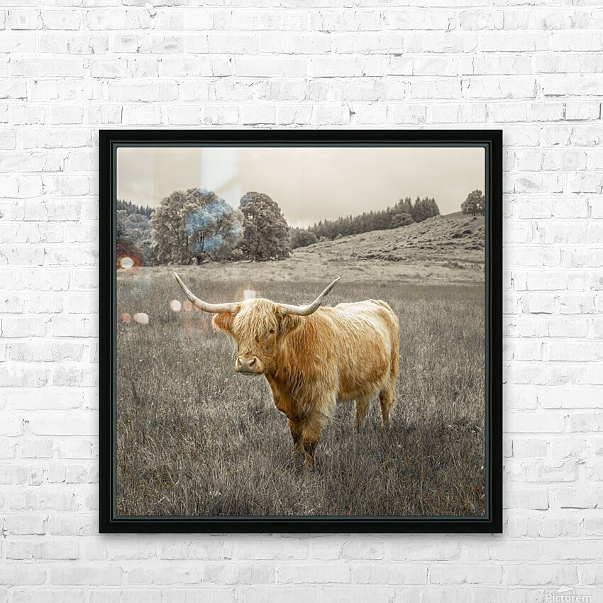 Highland Cows HD Sublimation Metal print with Decorating Float Frame (BOX)
