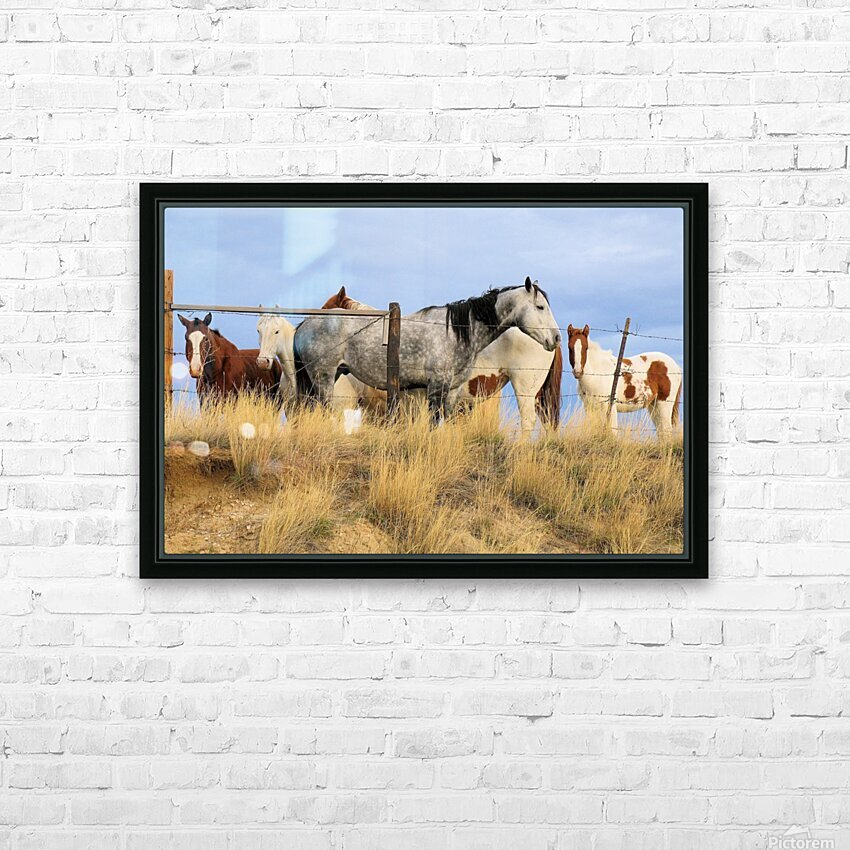 Little Bighorn Ponies HD Sublimation Metal print with Decorating Float Frame (BOX)