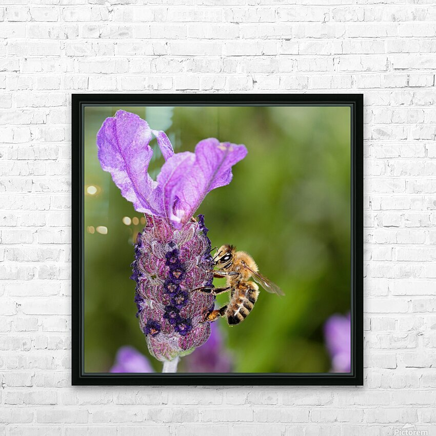 Bee On Lavender HD Sublimation Metal print with Decorating Float Frame (BOX)