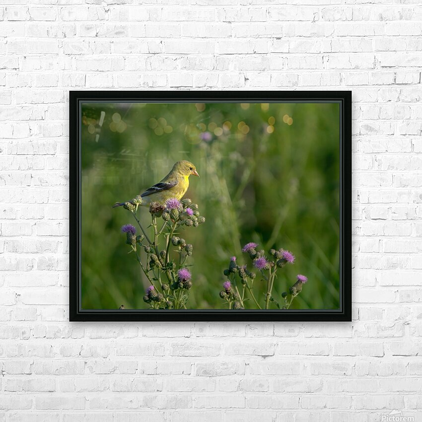 Goldfinch Female HD Sublimation Metal print with Decorating Float Frame (BOX)