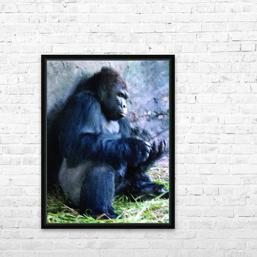 Alone Mountain Gorilla Africa HD Sublimation Metal print with Decorating Float Frame (BOX)