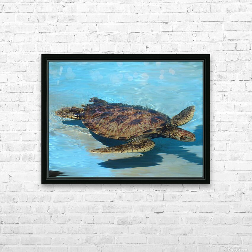 Sea Turtle - Natural World Kids Gallery HD Sublimation Metal print with Decorating Float Frame (BOX)