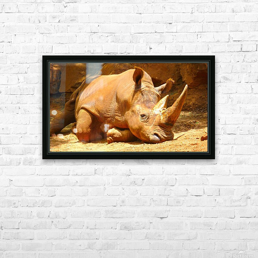 Rhino - Natural World Kids Gallery HD Sublimation Metal print with Decorating Float Frame (BOX)
