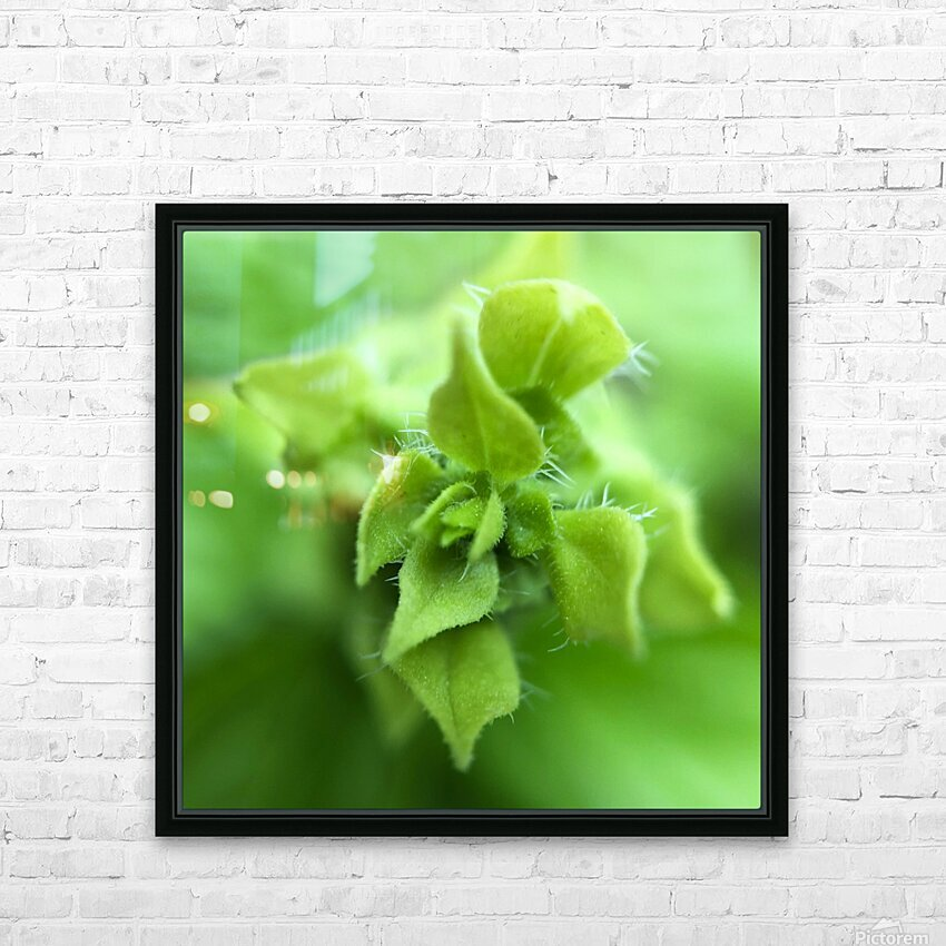 24_Green_Plant_6772_SQUARE HD Sublimation Metal print with Decorating Float Frame (BOX)