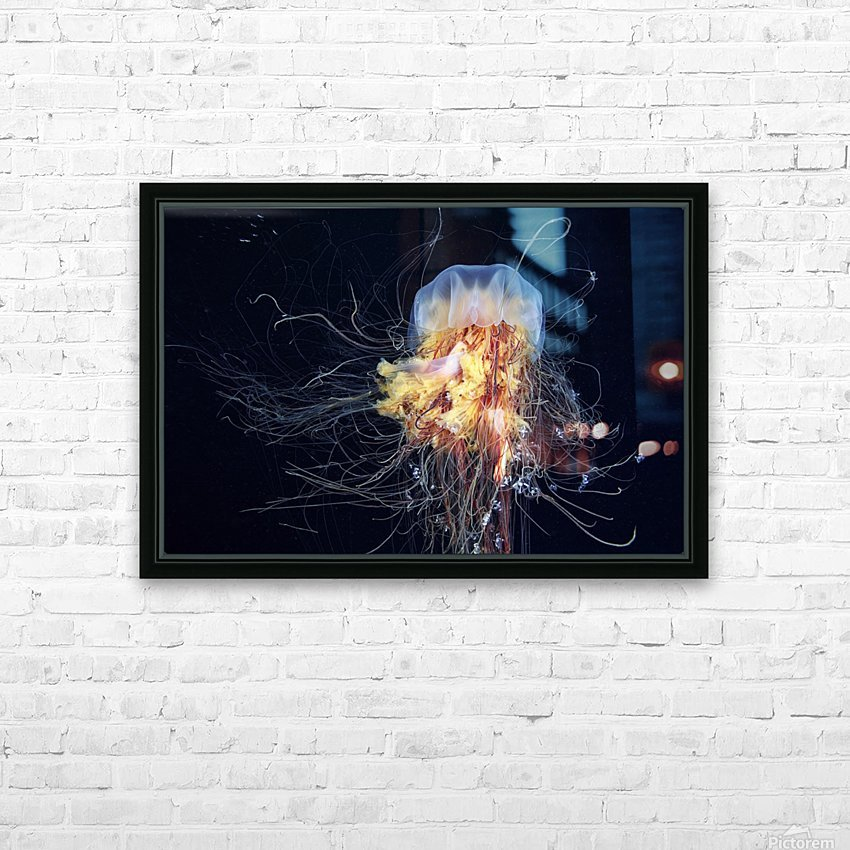 Giant Lion's Mane HD Sublimation Metal print with Decorating Float Frame (BOX)