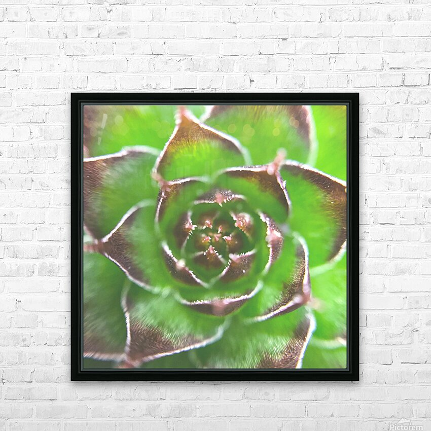 20_Green Succulent Perennial - Verte Vivace_9780_CLEAR SQUARE HD Sublimation Metal print with Decorating Float Frame (BOX)