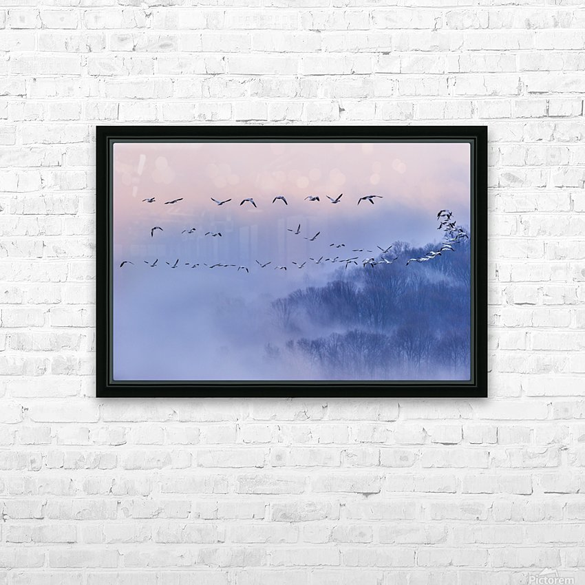 Snow Geese HD Sublimation Metal print with Decorating Float Frame (BOX)