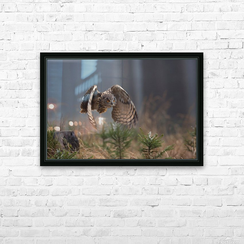Eurasian Eagle-Owl by Milan Zygmunt  HD Sublimation Metal print with Decorating Float Frame (BOX)