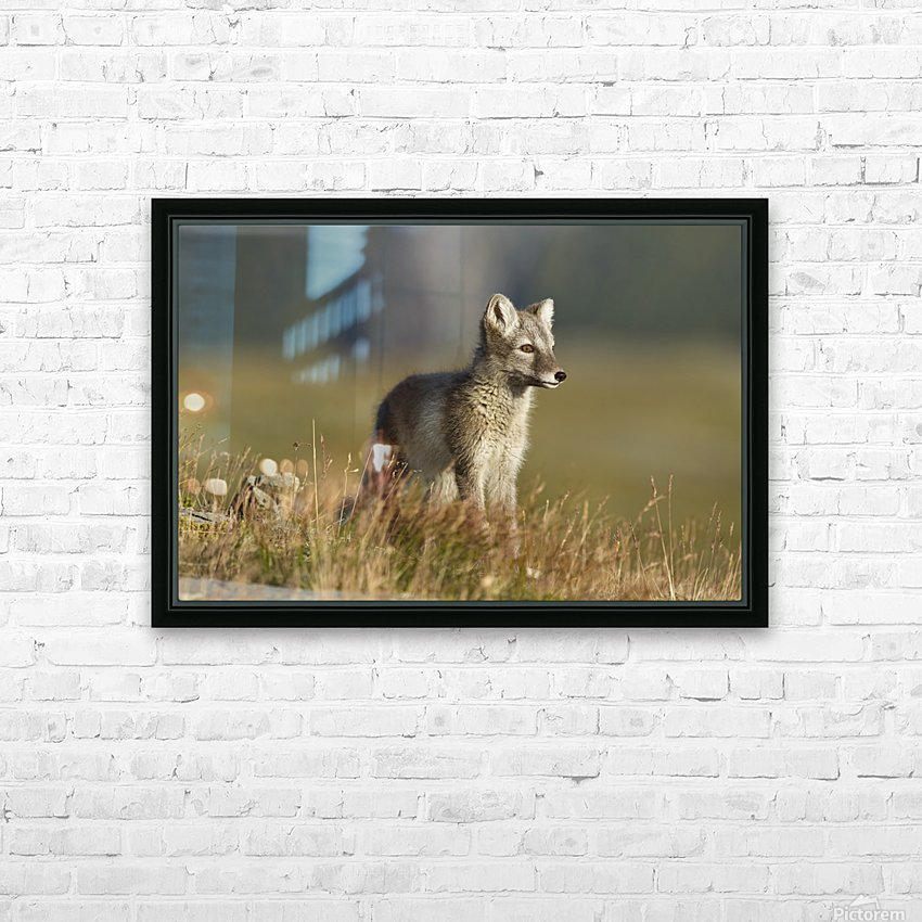 Arctic Fox Puppie by Karen Kolbeck  HD Sublimation Metal print with Decorating Float Frame (BOX)