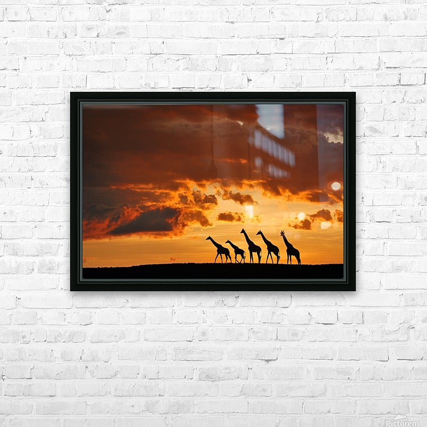 Five Giraffes HD Sublimation Metal print with Decorating Float Frame (BOX)