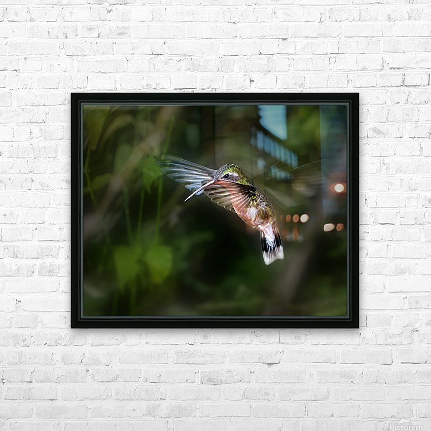 Hummingbird 1B by Leigh Pelton  HD Sublimation Metal print with Decorating Float Frame (BOX)