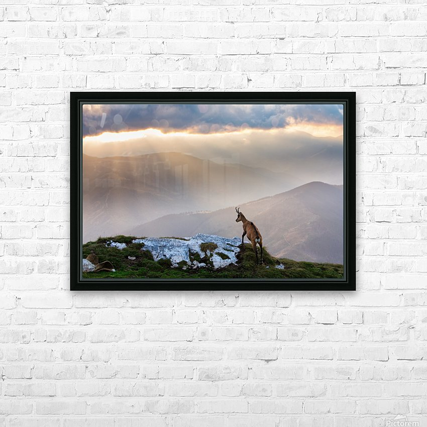 Chamois in Piatra Craiului Romania HD Sublimation Metal print with Decorating Float Frame (BOX)