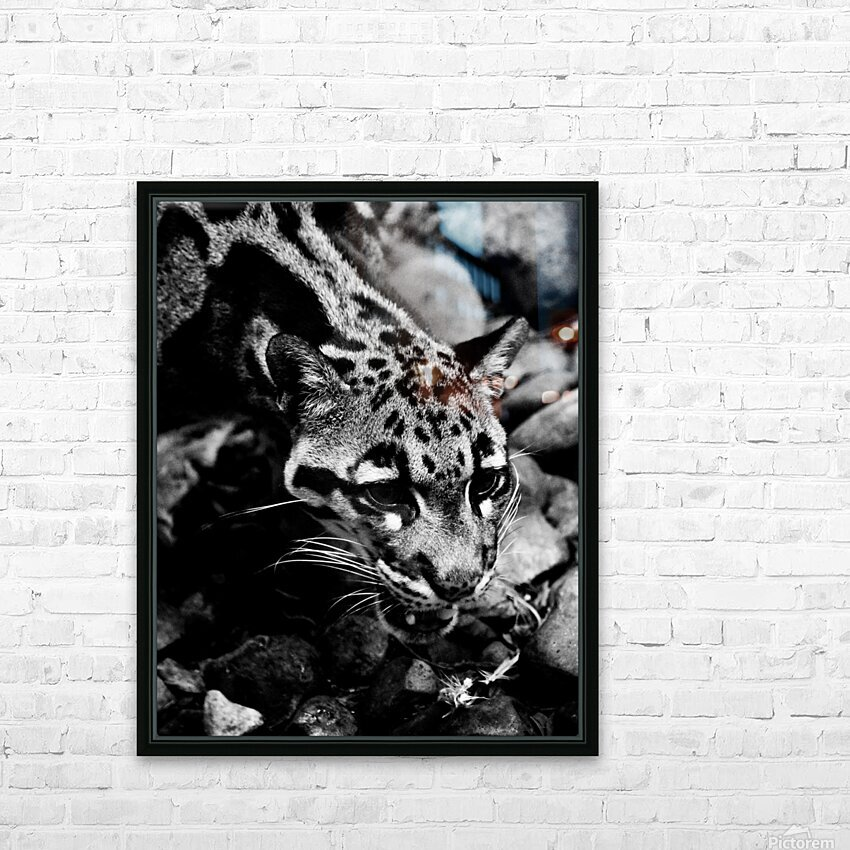 SPOTTED CAT HD Sublimation Metal print with Decorating Float Frame (BOX)