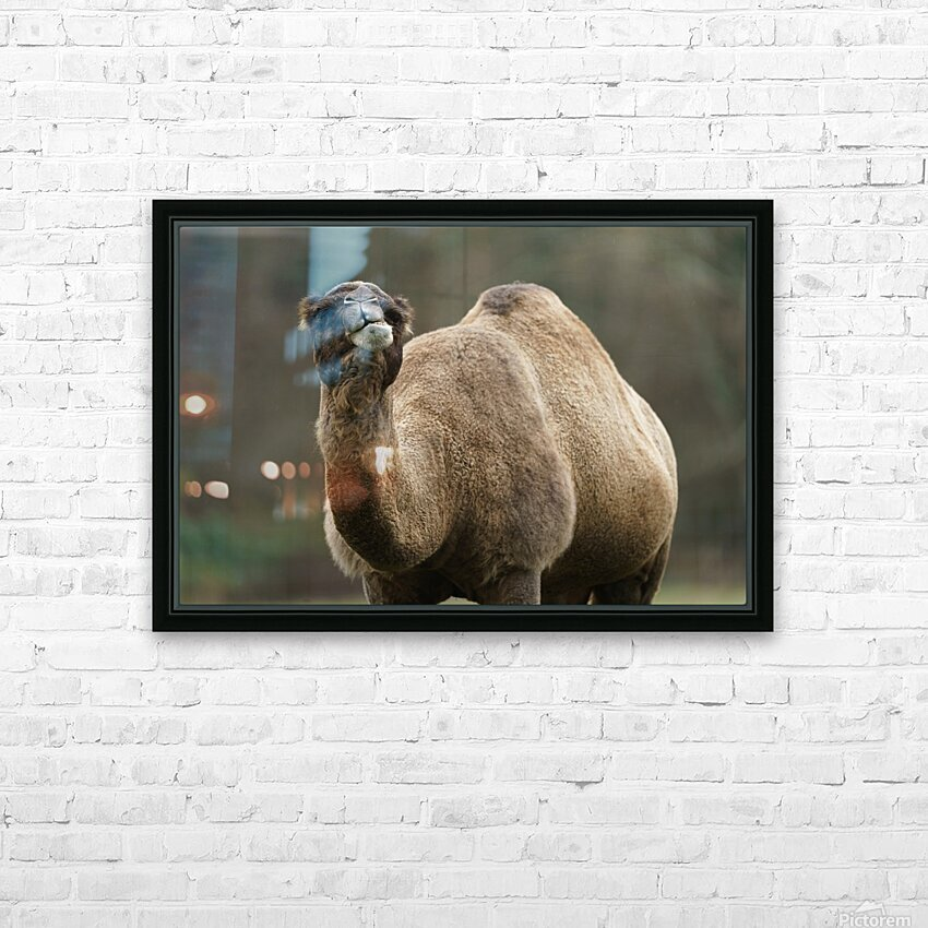 Camel HD Sublimation Metal print with Decorating Float Frame (BOX)