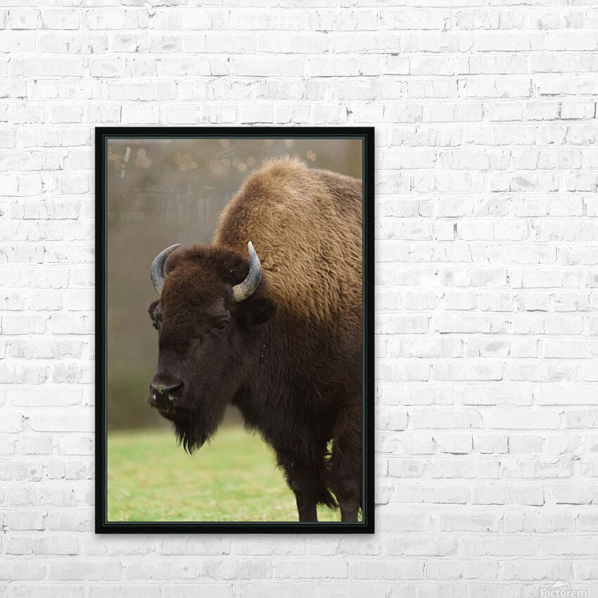 North American Buffalo HD Sublimation Metal print with Decorating Float Frame (BOX)