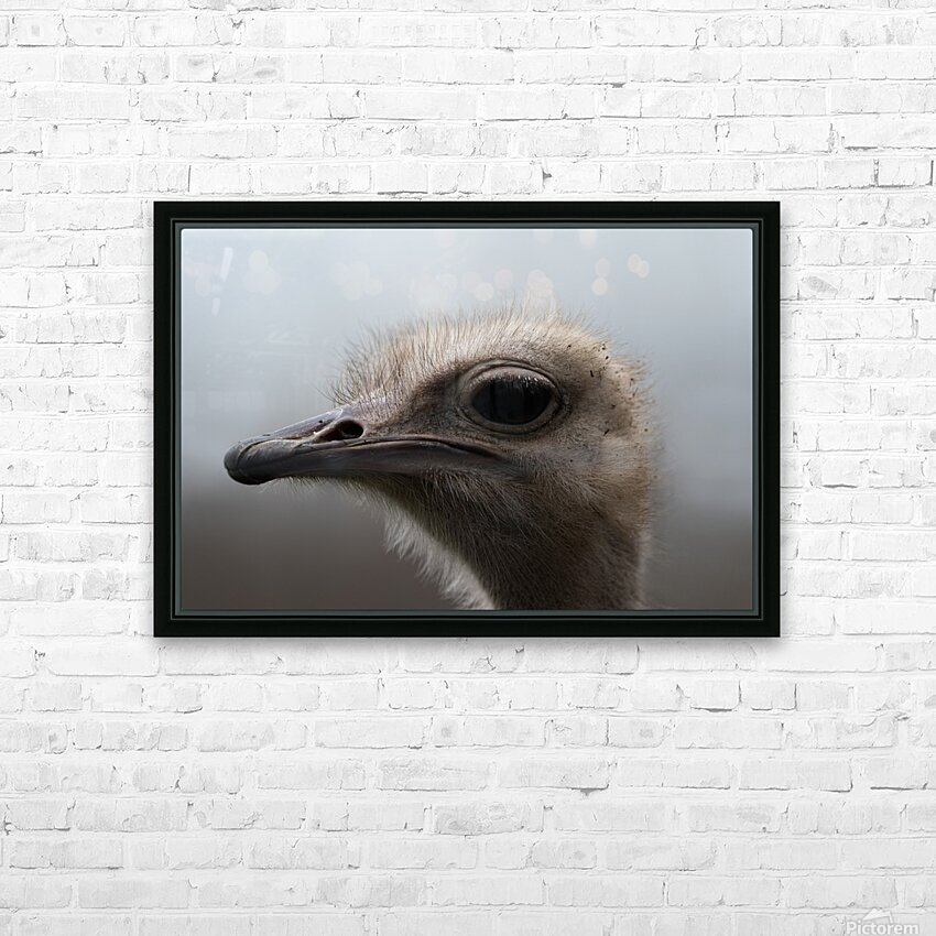 Ostrich HD Sublimation Metal print with Decorating Float Frame (BOX)