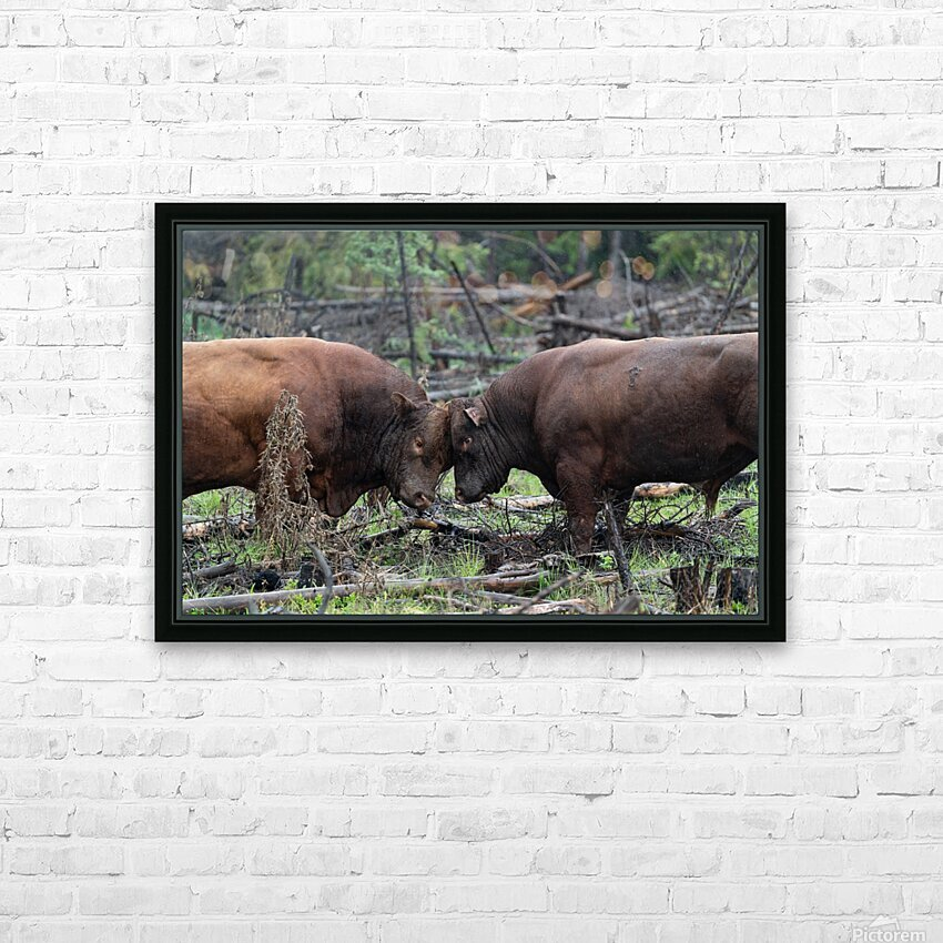 Bulls HD Sublimation Metal print with Decorating Float Frame (BOX)