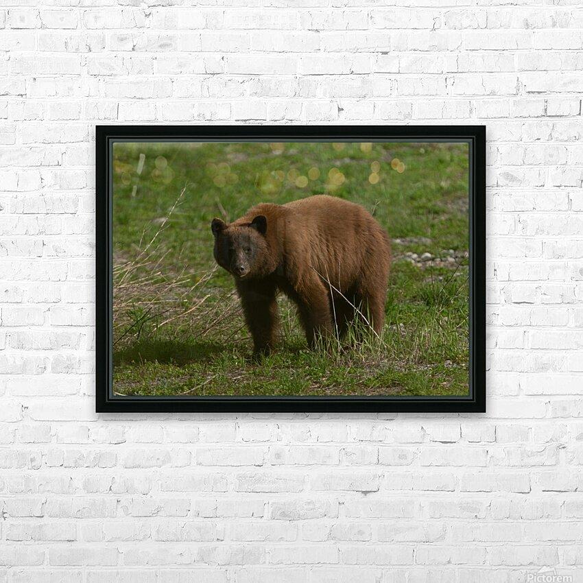 Cinnamon Black Bear HD Sublimation Metal print with Decorating Float Frame (BOX)