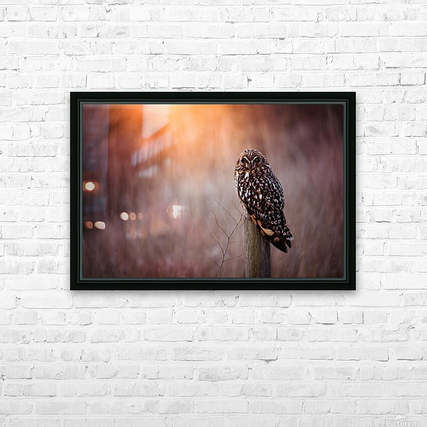 OWL HD Sublimation Metal print with Decorating Float Frame (BOX)