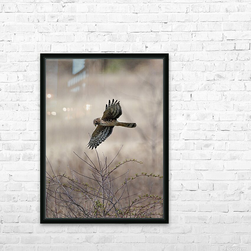 Wesley Allen Shaw 02112 HD Sublimation Metal print with Decorating Float Frame (BOX)
