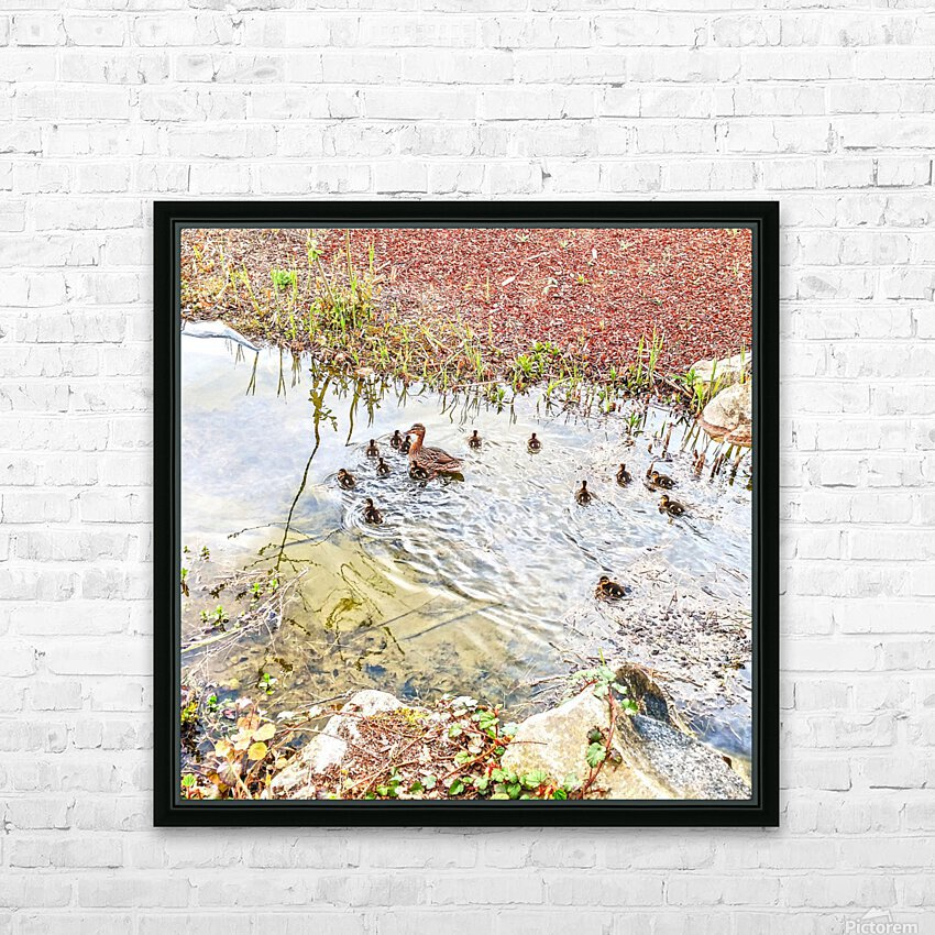 Spring Ducklings HD Sublimation Metal print with Decorating Float Frame (BOX)