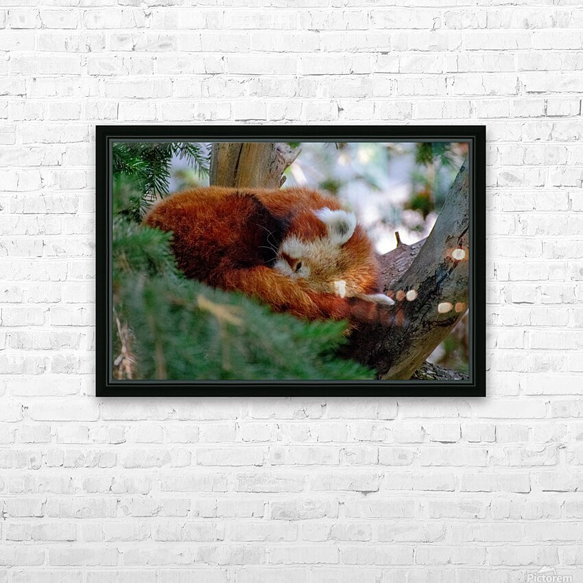 20181021 DSC 0500  2  HD Sublimation Metal print with Decorating Float Frame (BOX)
