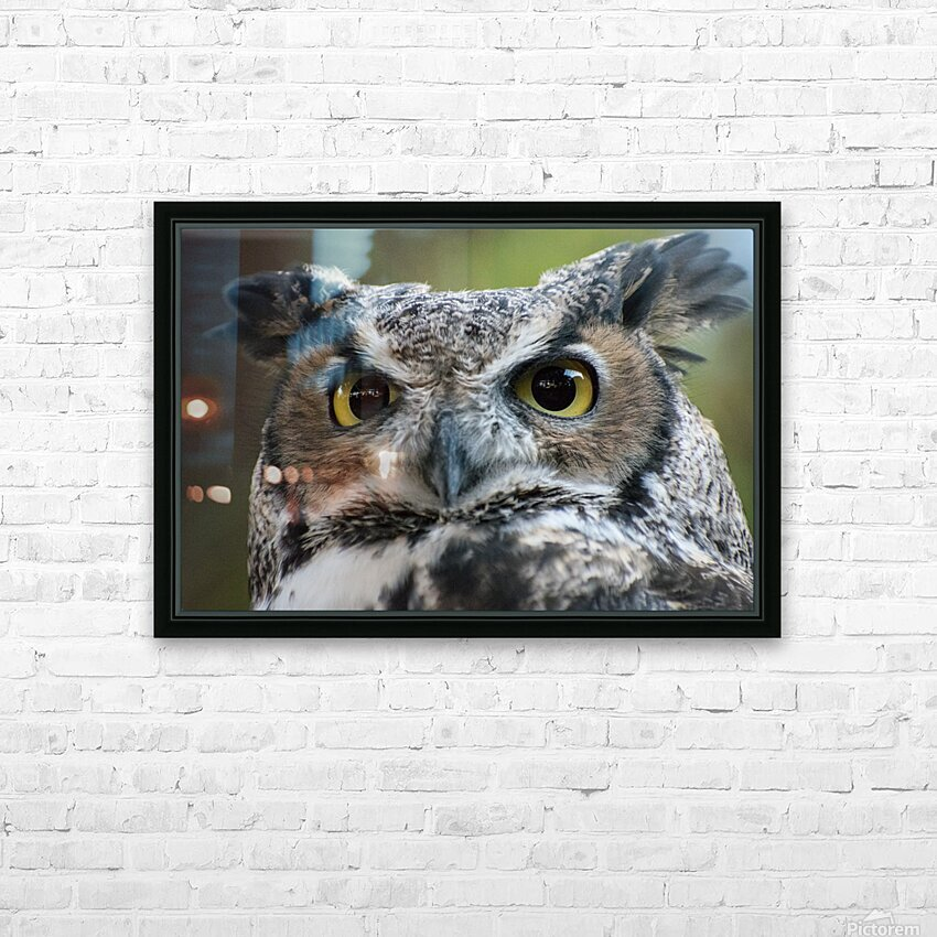 Owl  5 HD Sublimation Metal print with Decorating Float Frame (BOX)