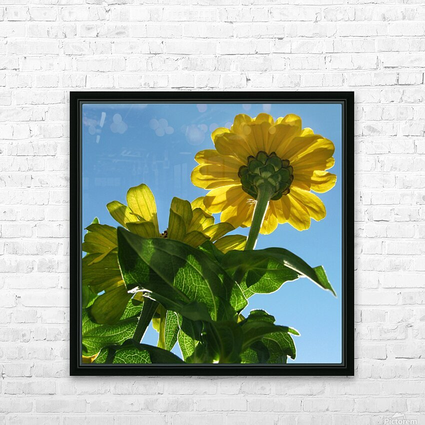 Summer Sky Flowers 8 AUG 2020 HD Sublimation Metal print with Decorating Float Frame (BOX)