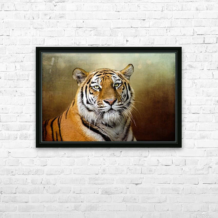 Bengal Tiger HD Sublimation Metal print with Decorating Float Frame (BOX)