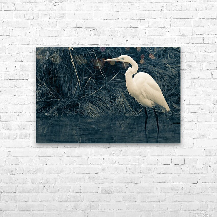 Great White Egret ap 1839 B&W HD Sublimation Metal print with Decorating Float Frame (BOX)