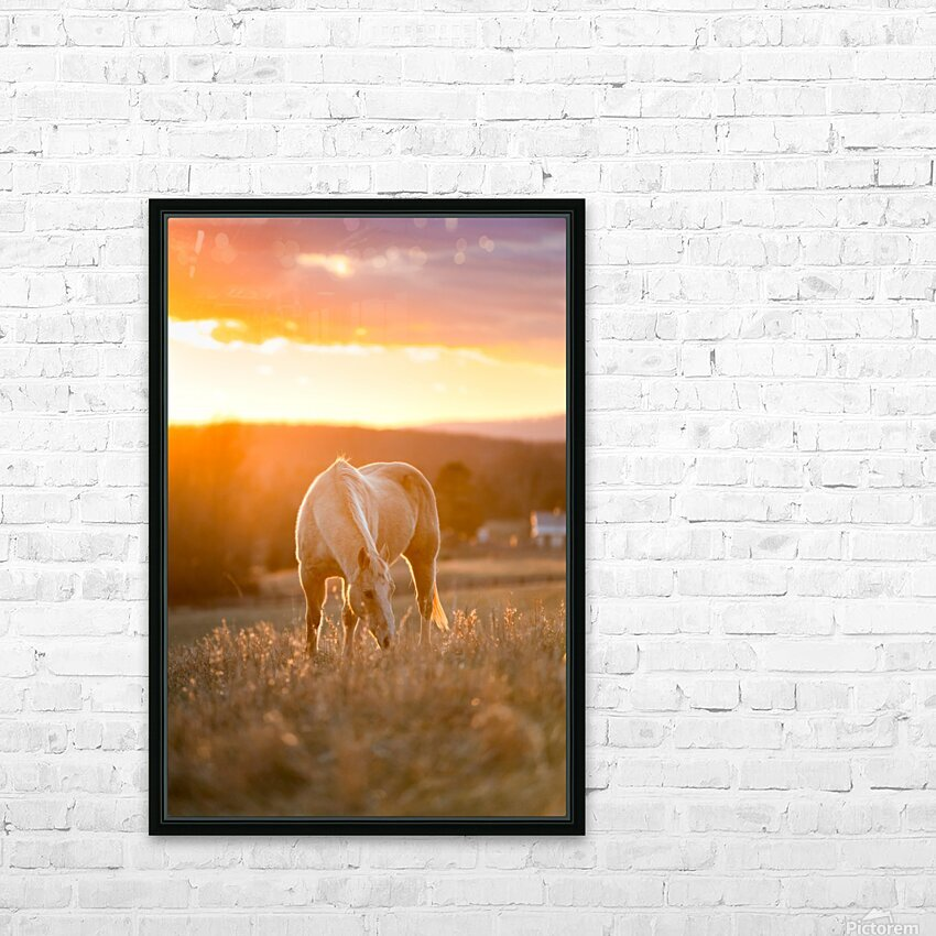 White Horse at Sunset HD Sublimation Metal print with Decorating Float Frame (BOX)