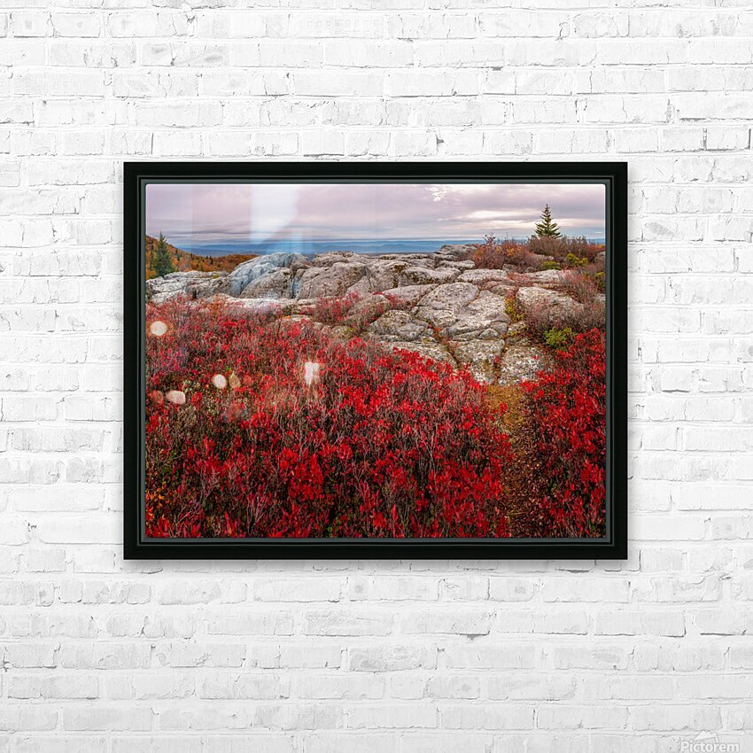 Bear Rocks Preserve apmi 1792 HD Sublimation Metal print with Decorating Float Frame (BOX)