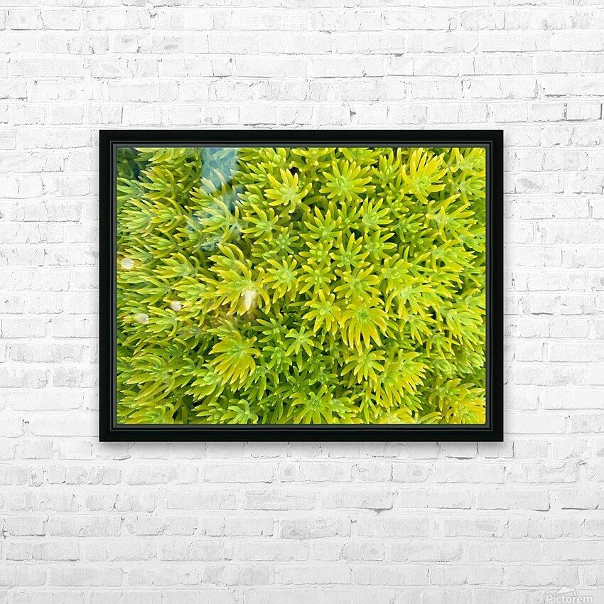 sedum angelina HD Sublimation Metal print with Decorating Float Frame (BOX)